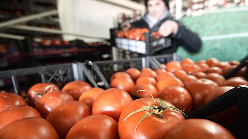tomaty pestitsydy