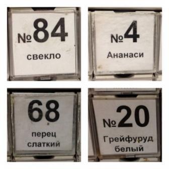 tsennik 16
